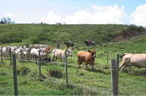 Prévention des risques professionnels dans l'agriculture